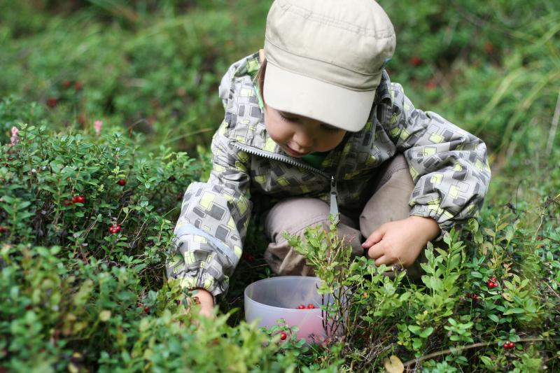 berries-finland.jpg